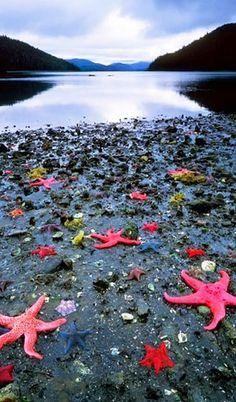 Starfish Colony - West Coast New Zealand
