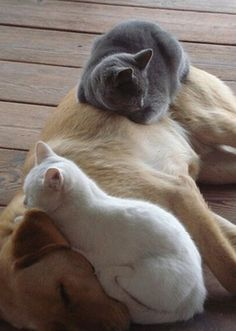 Cats on dog