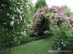 Kolorowy ogród na piasku - strona 510 - Forum ogrodnicze - Ogrodowisko Monteverde, Plants, Gardens, Flowers, Outdoor Gardens, Plant, Royal Icing Flowers, Flower, Florals