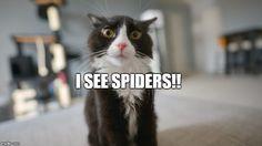 Spiders!! | 4Birds.net