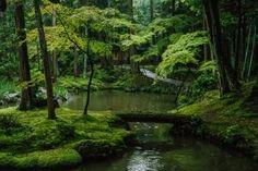 The Saihoji garden is covered with some 120 varieties of moss, Honshu Island, Japan Moss Temple, Pinterest Garden, Forest Path, Enchanted Garden, Shade Garden, Garden Path, Fantasy Landscape, Walking In Nature, Summer Garden
