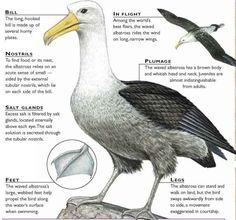 emu diagram life science birds pinterest emu and life science. Black Bedroom Furniture Sets. Home Design Ideas