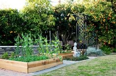 raised beds, out of pallets perhaps?
