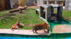 Rio Safari Elche. #Spain Safari, Tigers, Parks, Beach, Animales, Safety
