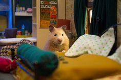 """Ganze 1.984 Tage dauerte der Bau der handgemachten Miniaturstadt """"Yumville"""". Sie ist das neue Zuhause einer niedlichen Hamsterfamilie in der…"""