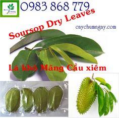 http://caychumngay.com.vn/images/product/goc/goc_1367061136.jpg