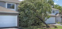 O poliță de asigurare pentru locuințe poate acoperi repararea daunelor aduse casei tale, a altor structuri (garaje, magazii, garduri, foisoare, piscine, panouri solare, etc.), cheltuieli cu eliminarea copacilor/ramurilor căzute, cheltuieli cu cazarea temporara (în timp ce se fac reparații) Pruning Plants, Tree Pruning, Sprinkler System Installation, Stump Removal, Police Activities, Outside World, Tree Roots, Plant Species, Small Plants