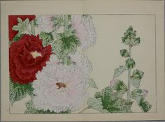 Title : A Picture Album of Western Plants and Flowers Artist : Tanigami Konan Publisher : Unsodo Year : 1978's reprint