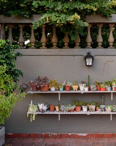 Salvaged window shutters were repurposed as plant shelves. Its gaps help the water drainage.