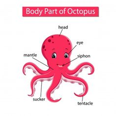 Diagram showing body part octopus Royalty Free Vector Image Learning English For Kids, English Lessons For Kids, French Language Learning, Teaching English, Learning Spanish, Kids Learning, Fish Activities, Kindergarten Activities, Preschool Activities