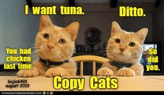 ALWAYS COPYING EACH OTHER - LOLcats is the best place to find and submit funny cat memes and other silly cat materials to share with the world. We find the funny cats that make you LOL so that you don't have to. Silly Cats, Cats And Kittens, Cute Cats, Funny Cats, Funny Animal Memes, Funny Animal Pictures, Funny Memes, Pretty Cats, Beautiful Cats
