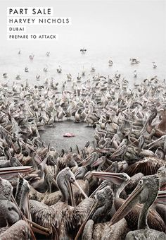 """""""Pelicans"""", a print advertisement for Sales@Harvey Nichols in Dubai, has won Gold award at the International Andy Awards held this week. A huge pod of pelicans gathers around one fish. The Pelicans ad was developed at Y, Dubai."""