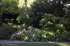 Lee Ann Torrans Gardening | Ferns in Texas | http://leeanntorrans.com
