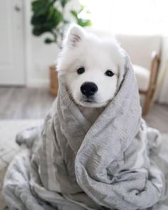 Dogs are the most loyal friends of human beings. Many friends like to keep dogs as pets.Gloria will share share ten interesting little knowledge about dogs Super Cute Puppies, Cute Baby Dogs, Cute Little Puppies, Cute Dogs And Puppies, Cute Little Animals, Cute Funny Animals, Doggies, Little Husky, Puppies Puppies