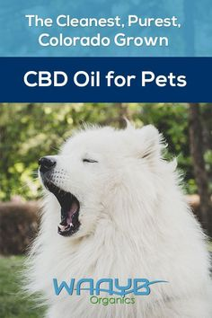 Buy WAAYB Organics Organic CBD Oil for Pets online. The best CBD oil for pets in and strengths. 30 servings in each bottle. Pets Online, Best Pet Insurance, Health Insurance, Cbd Hemp Oil, Animal Projects, Pet Health, Health Tips, Natural Flavors, Pet Care