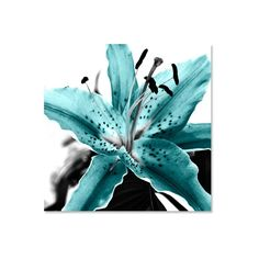 turquoise lily