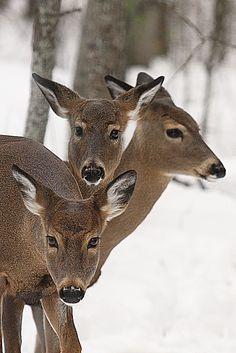 Lifeinthenorthwoods.com on Flickr...