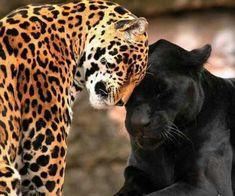 It's never about colour .. it,s all about behaviour