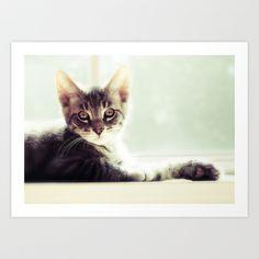 Tabby Kitten in a window Art Print by Elysa Darling - $18.00