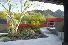 steve martino / ocotillo drive residence, phoenix Why not paint the wall? Modern Landscape Design, Contemporary Landscape, Urban Landscape, Landscape Architecture, Desert Landscape, Contemporary Gardens, Abstract Landscape, Succulent Landscaping, Modern Landscaping