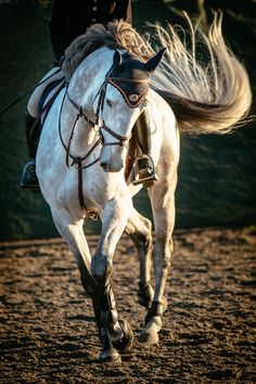 Gray Grey - Art Of Equitation All The Pretty Horses, Beautiful Horses, Animals Beautiful, Cute Animals, Horse Photos, Horse Pictures, Majestic Horse, Tier Fotos, Mundo Animal