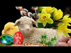 Lamb, Easter, Youtube, Holidays, Humor, Funny, Fitness, Friday, Holidays Events