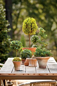 Combine several English ivy topiaries and a clipped lemon cypress to accent a garden table. Mix spirals, globes, columns, and lollipop shapes of varying heights. Unify the look with terra-cotta pots. We love the flared sides of these by Campo de' Fiori (campodefiori.com). The topiaries are by Schubert Nursery (schubertnursery.com), available at your local garden center.