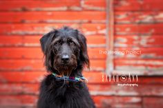 Dog photos ~ SarahAnn Dog Photography, Calgary Alberta Canada. Visit my blog to find out more on my pet loss and bereavement project and how you can participate and share your story.