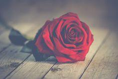Nézze meg a poliamory házasok és társkereső ingyenes online