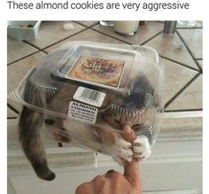 Aggressive almond cookies - Funny Joke Pictures