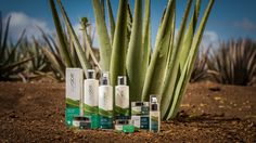 Curaloe®, from plant to bottle! www.curaloe.com