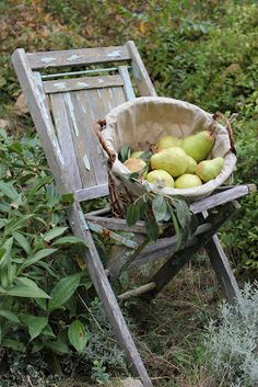 Looks like the pears I used to eat sometimes from the old pear tree... the cows liked to eat them too, well excuuuse me... :-)