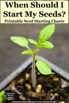 When Should I Start Seeds? Printable Charts for Planting You'll know when to start seeds indoors and out with these printable seed starting charts, organization strategies and tips for happier transplants. Hydroponic Gardening, Hydroponics, Container Gardening, Vegetable Gardening, Indoor Gardening, Veg Garden, Spiral Garden, Balcony Gardening, Veggie Gardens