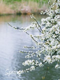 Spring in the Nederlands