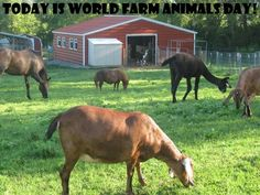 Join the Farm Animal Rescue of Mifflinburg in celebrating World Farm Animals Day on October 2, 2015!