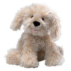 Karina Labradoodle Dog