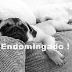 Domingo + Preguiça + Frio = ENDOMINGADO