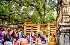 bodhi-tree-mahabodhi-temple