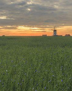 Molen tijdens zonsopkomst  #sunrise #westvlaanderen #vlaanderen #flanders #belgium  #igflanders #igbelgium #igersflanders #igersbelgium #zonsopkomst #goldenhour #goudenuur