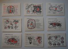 Biology Flash Cards by krakencrafts, via Flickr