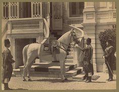Adı Ferhan ya da Asil  olan bu at Bağdat'ta ki bir aşiret reisinin atıdır…
