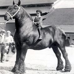 Awesome horse, awesome kid.....