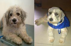 Mi primer perrito rescatado....  En la foto de la izquierda es como lo encontre el sabado 2 de Junio... asi se ve hoy dia :)