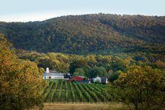Monticello Wine Tour