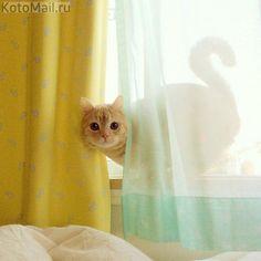 Утреннее появление кота