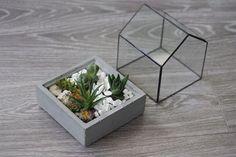 Домашний флорариумКомпозиции из живых растений