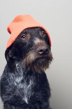 I didn't have to wear this when I was a young pup, I was always warm enough.