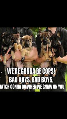German Shepherd Puppies In Police Training.