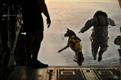 https://flic.kr/p/q2gxxe | Riffing on news that a dog was used in the Bin Laden raid, FP lets us know how man's best friend flies (during military operations) | A U.S. Army soldier with the 10th Special Forces Group and his military working dog jump off the ramp of a CH-47 Chinook helicopter from the 160th Special Operations Aviation Regiment during water training over the Gulf of Mexico as part of exercise Emerald Warrior 2011 on March 1, 2011.  Emerald Warrior is an annual two-week…