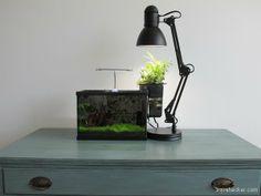 """Mini aquaponics setup by """"Aquahacker""""."""